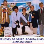 petts-wood-cockers-colombia-juancho