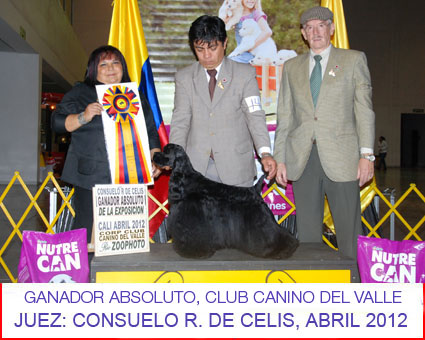 petts-wood-cockers-colombia-romeo26