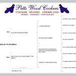Petts Wood Cockers colombia - Arepa