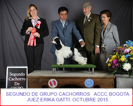 petts-wood-cockers-colombia-charlie