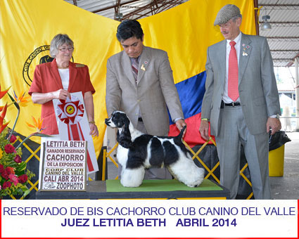 petts-wood-cockers-colombia-matheo