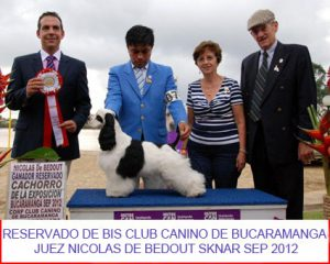 petts-wood-cockers-colombia-bruno