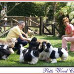 petts wood cockers, colombia-nuestra historia